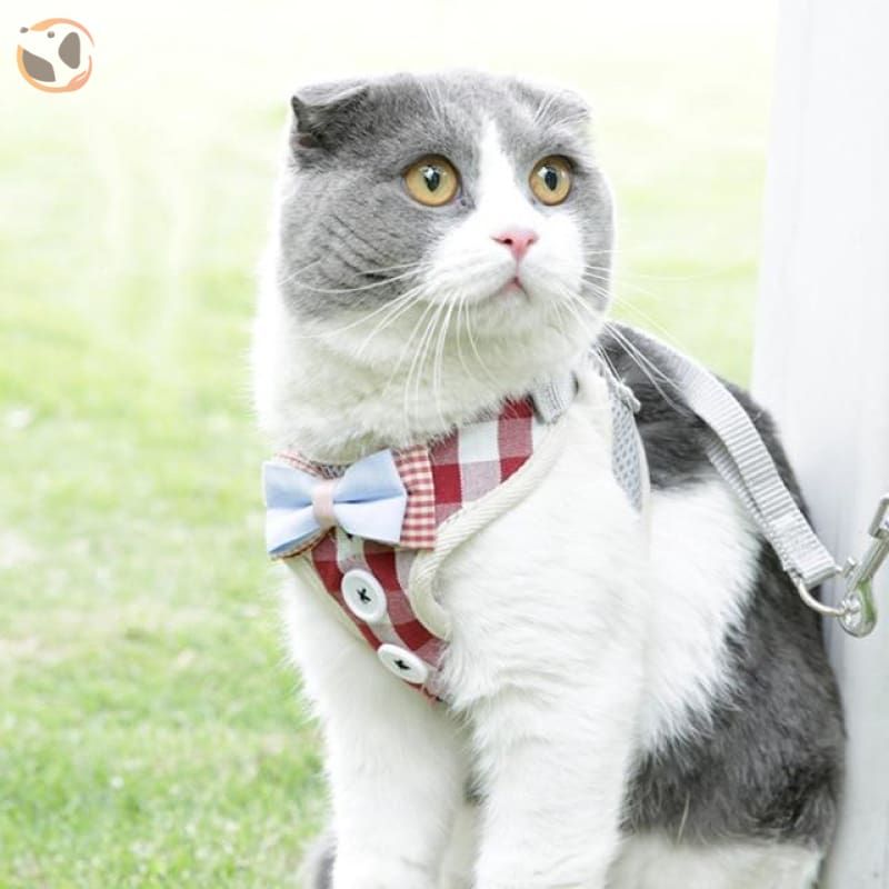 Adjustable Harness with Leash for Cats - red size S