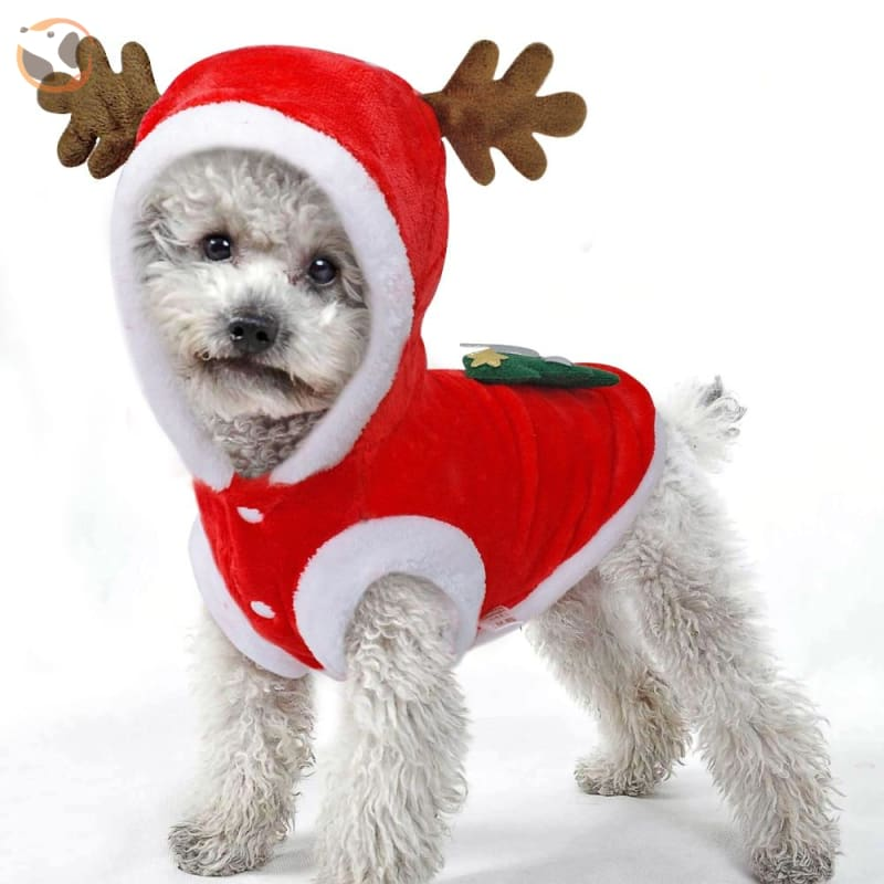 Christmas Santa Costume for Small Dogs