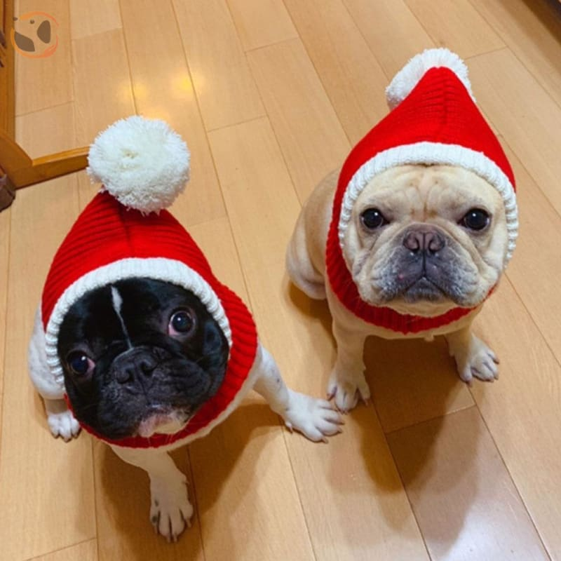 Funny Christmas Dog Hat - xs