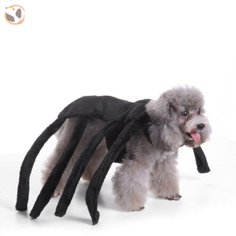 Funny Dog Costumes For Halloween - Spider / L