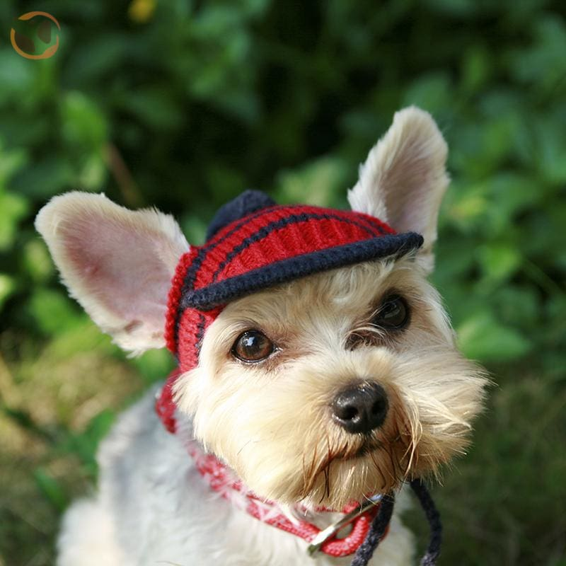 Luxury Knitting Sunscreen Hats For Small Dogs - Red / S