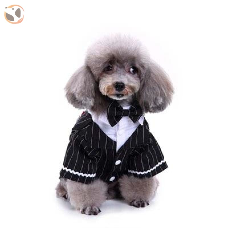 Newly Design Classic Dog Tuxedo - Black Striped / L