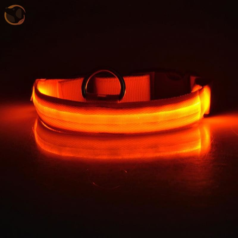 Usb Rechargeable Led Dog Collars - Orange / L