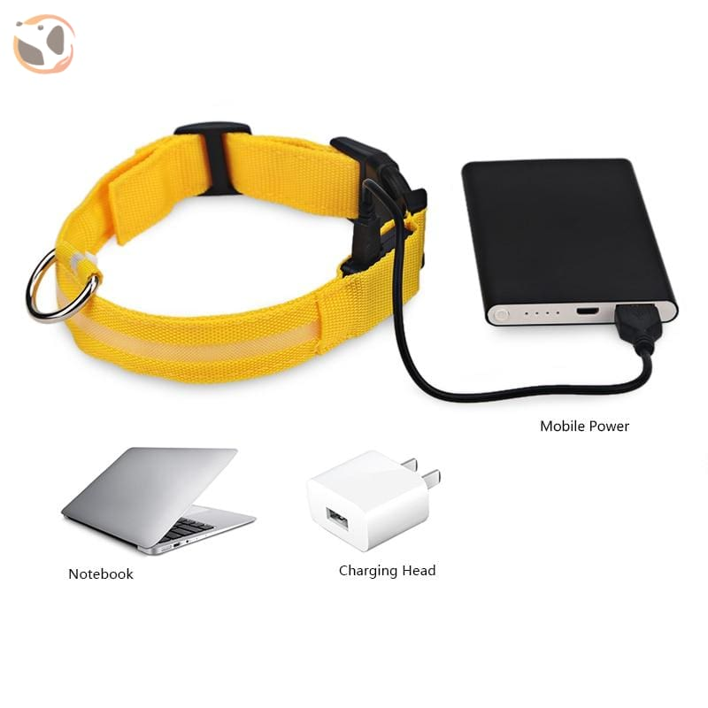 Usb Rechargeable Led Dog Collars