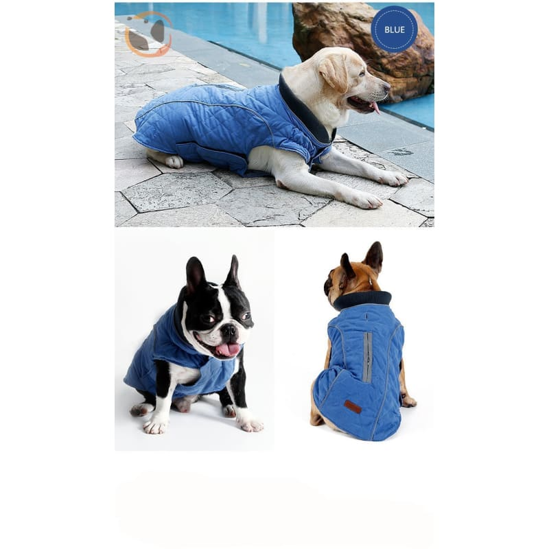 Winter Waterproof Dog Coats - Blue / Xs