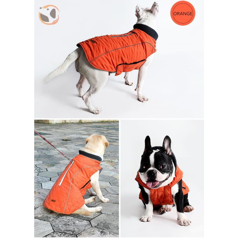 Winter Waterproof Dog Coats - Orange / Xs