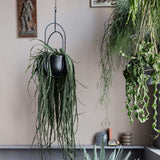 Hanging Deco Pot