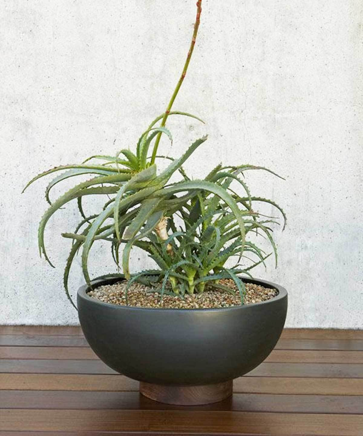 Case Study Bowl Planter with Plinth by Loloi | TRNK