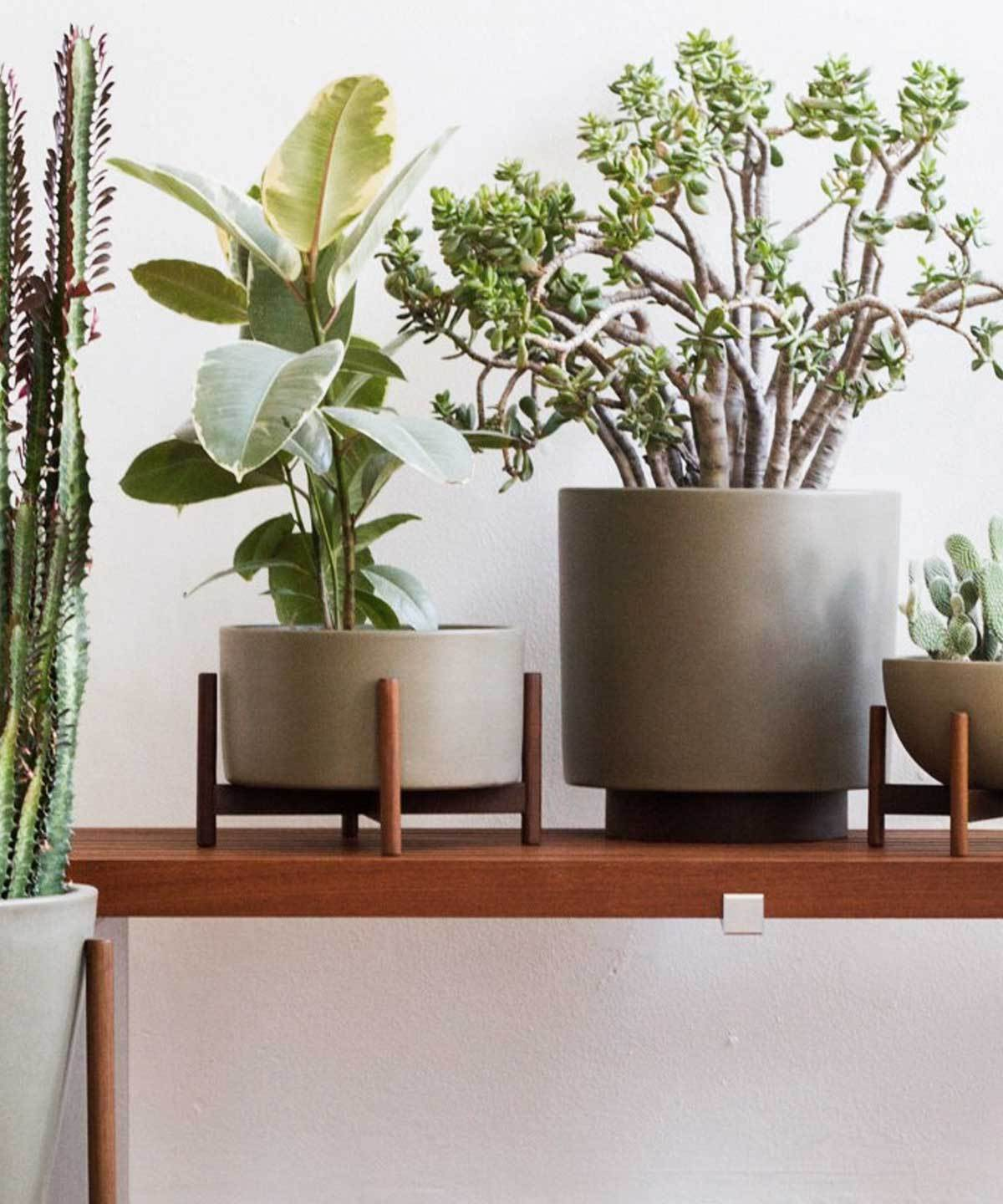 Case Study Table Top Planter by Loloi | TRNK
