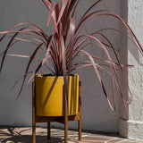 Case Study Floor Planter by Loloi | TRNK