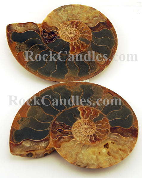 Large Ammonite Fossil Pair