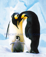 Penguins Love Poster