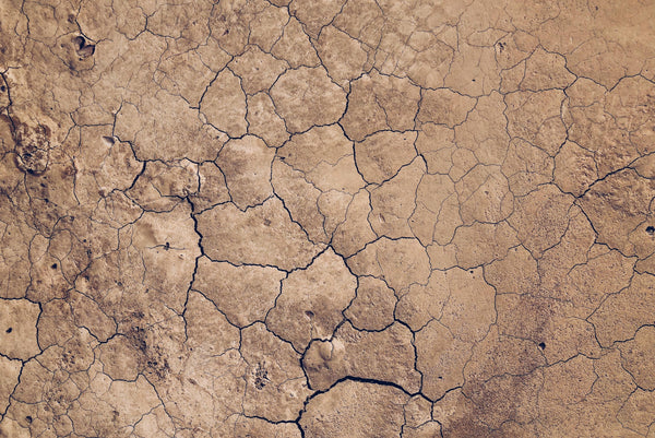 When Soil is Left High and Dry, So Are We | Almeda Labs