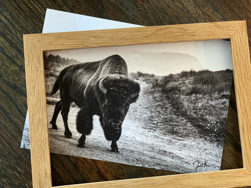 Sassy Bison Photo- 5x7, Signed by Jill Krause