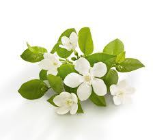Neroli Absolute 5% in Grapeseed 10ml