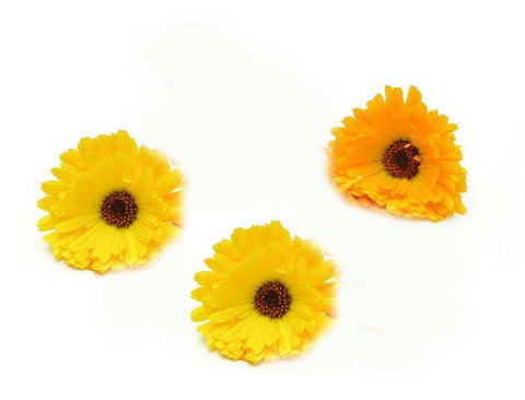 Calendula Absolute 5% in Grapeseed Oil 10ml