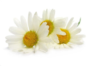 Chamomile Matricaria Absolute 5% in Grapeseed 10ml