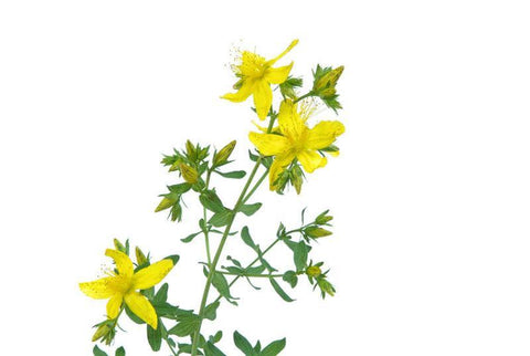 Hypericum/St John's Wort Cream 50ml