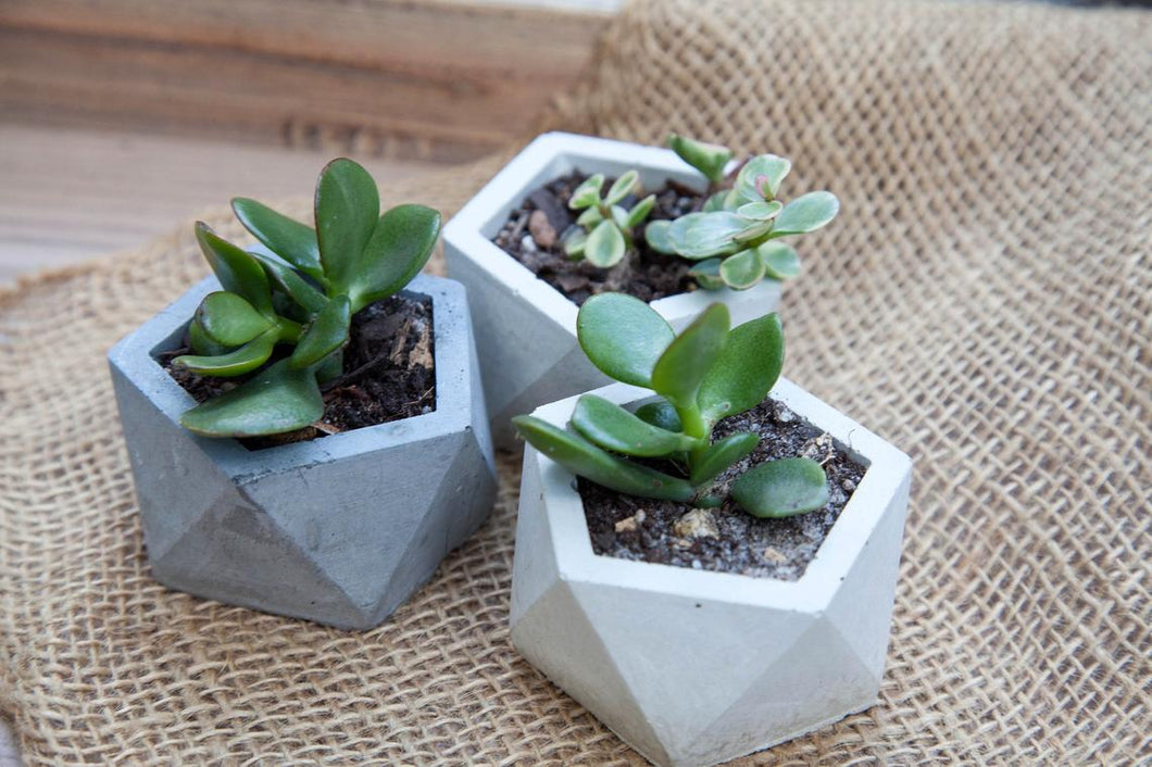 Small Concrete Planter