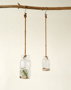 Milk Bottle Terrarium