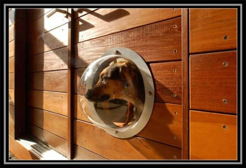 a dog sitting in front of a mirror