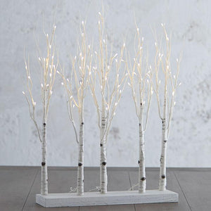 Birch Lit Grove