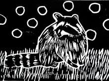 """Raccoon in the Night"" 6"" x 8""Limited Edition Print of 10"