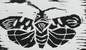"""Moth"" 3""x5"" Limited Edition Print of 5"
