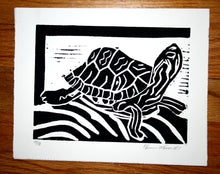 """Turtle"" 6"" x 8"", Limited Edition Print of 10"