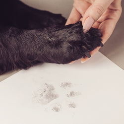 Pawprint Kit