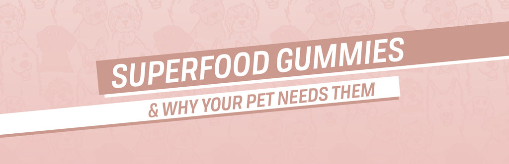 Superfood Gummies & Why Your Pet Needs Them!