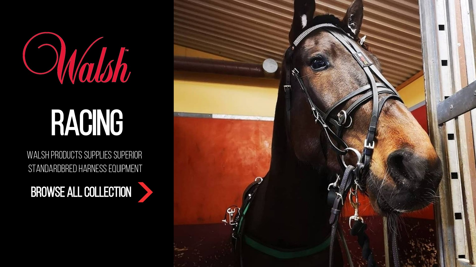 Equestrian Equipment & Horse Accessories | Walsh Products