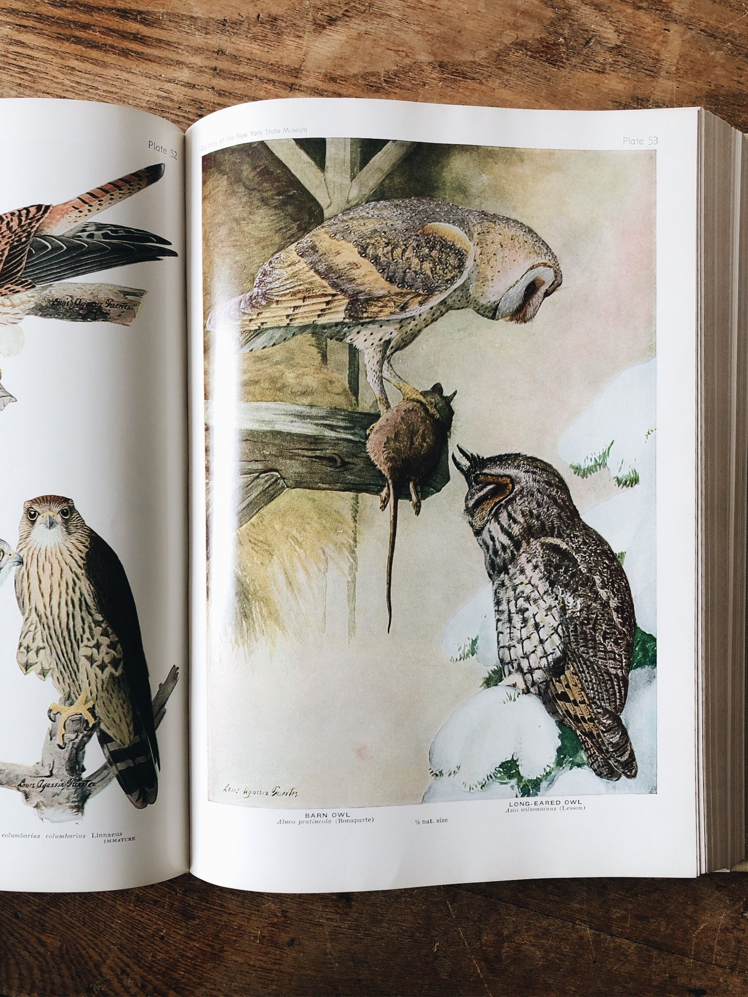 Vintage 1940s Birds of America Book