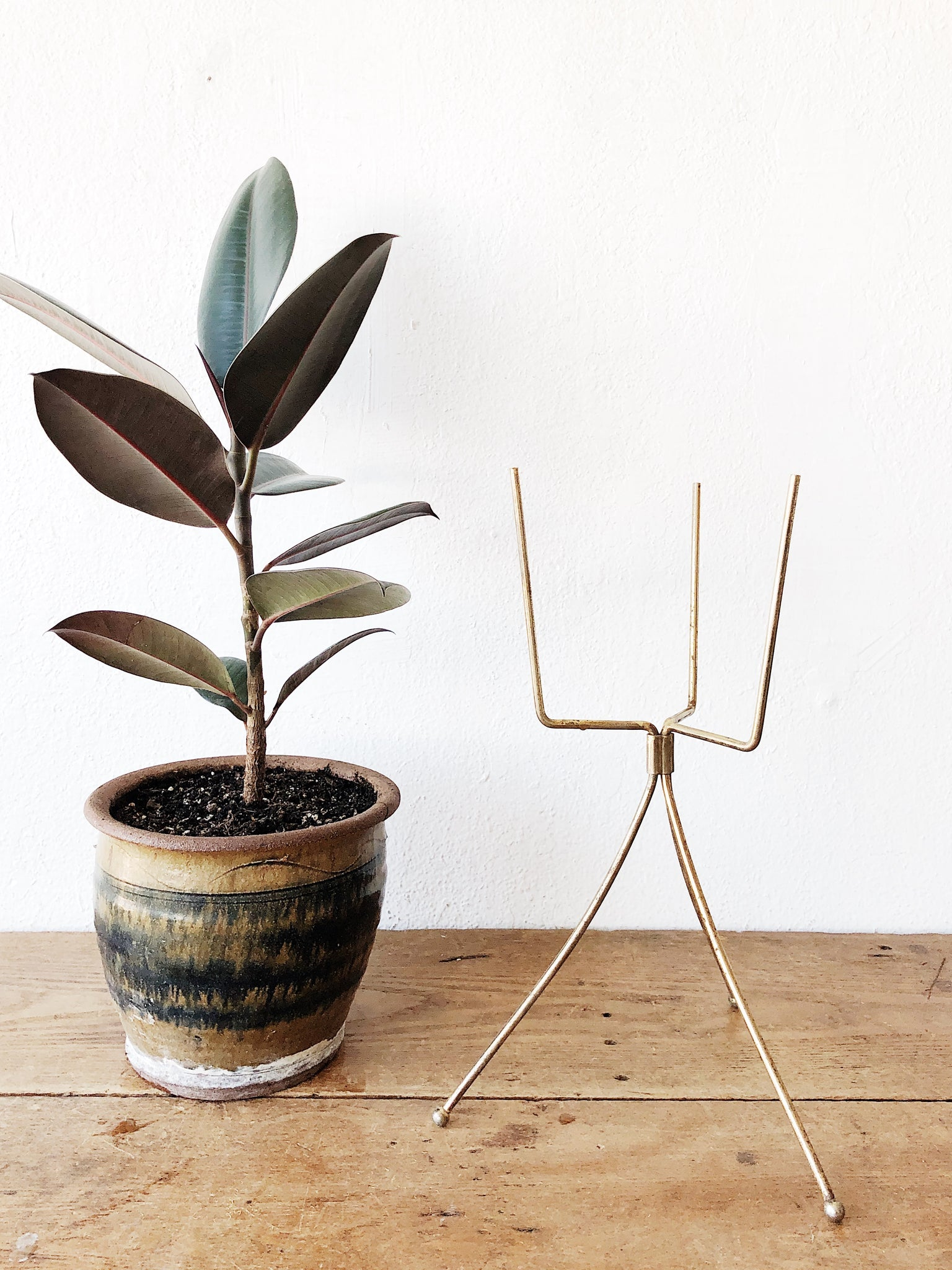 MCM Plant Stand and Ficus Elastica