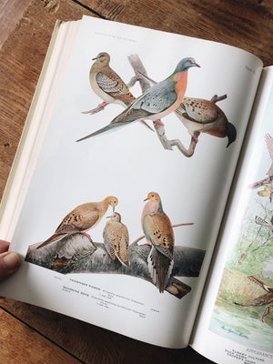 Vintage 1930s Birds of America Book