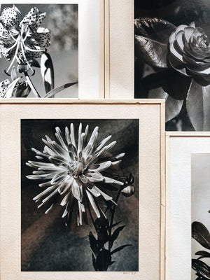 Vintage Original Botanical Photograph