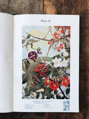 Vintage Botanical Book