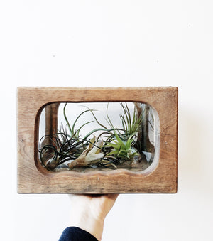 Antique Wood and Glass Terrarium