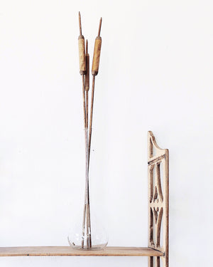 Vintage Wooden Cattails in Laboratory Glass