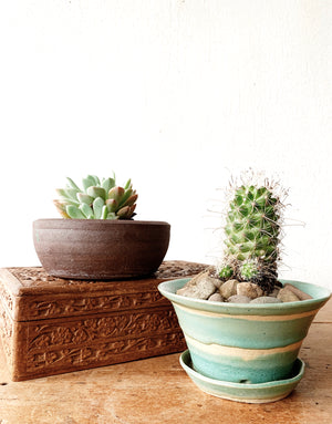 Potted Cactus in Handmade Pottery with Drainage