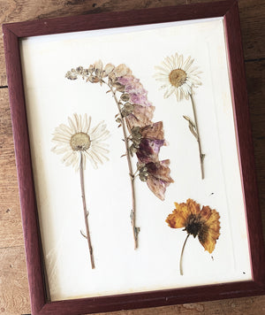 Vintage Framed Dried Flower Art