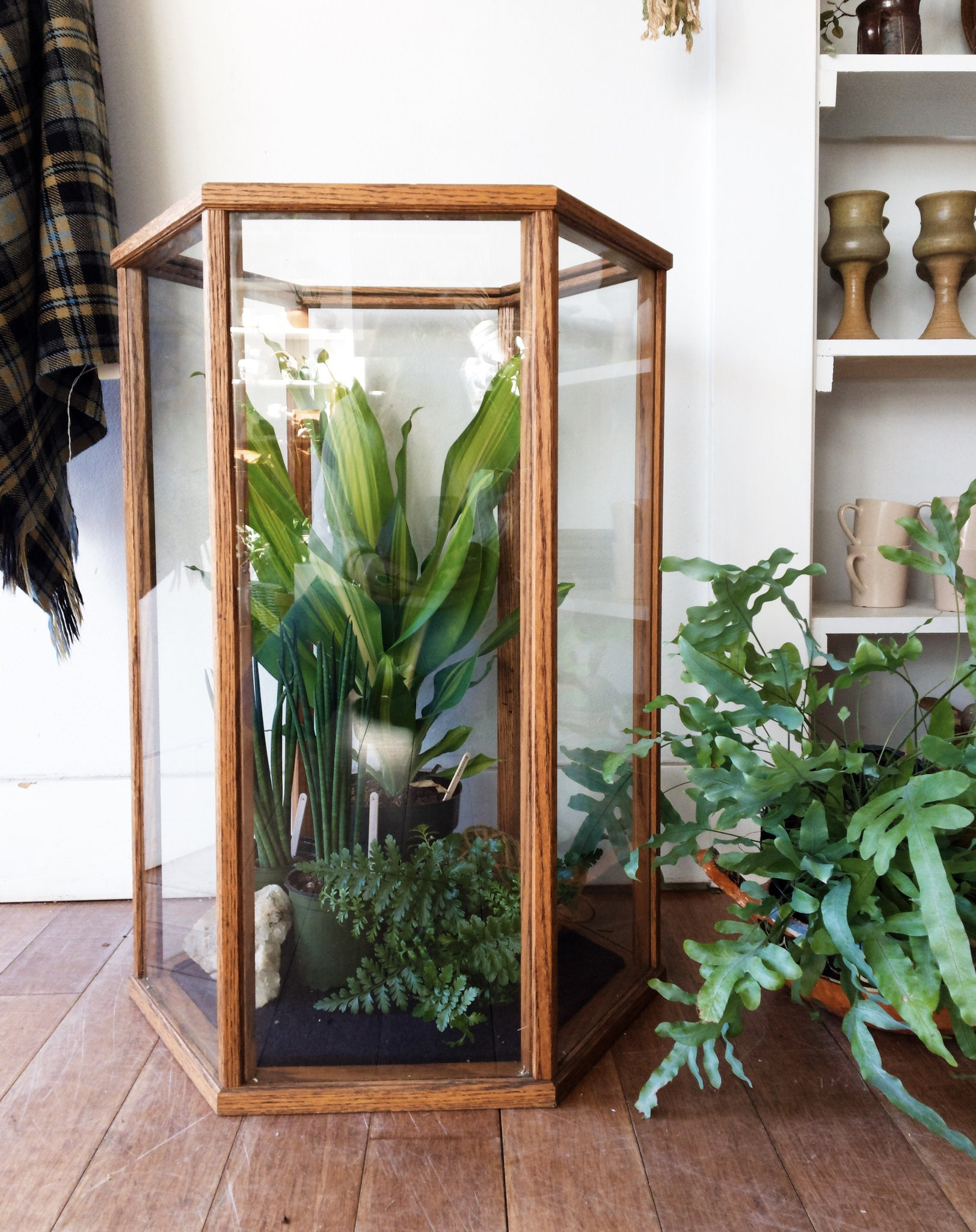 Large Wood and Glass Terrarium