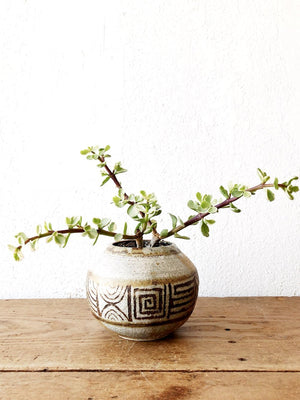 Variegated Portulacaria in Vintage Pottery