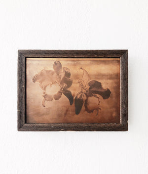 Vintage Framed Iris Copper Plate