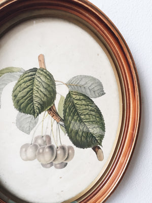Antique Framed Cherries