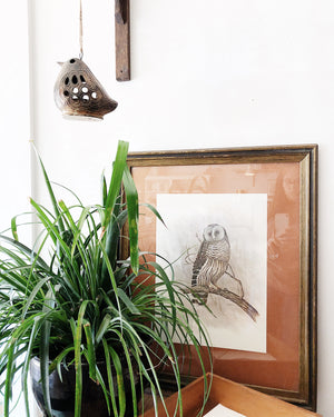 Vintage Framed Rambow Owl Lithograph