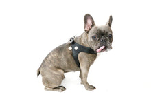 Load image into Gallery viewer, VP Pets Black Harness - Vanderpump Pets