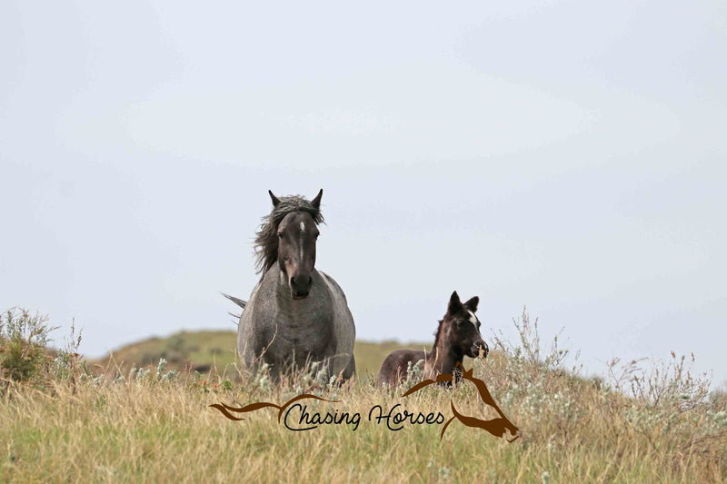 Mare Mist and Filly Misty Blue 6 Print