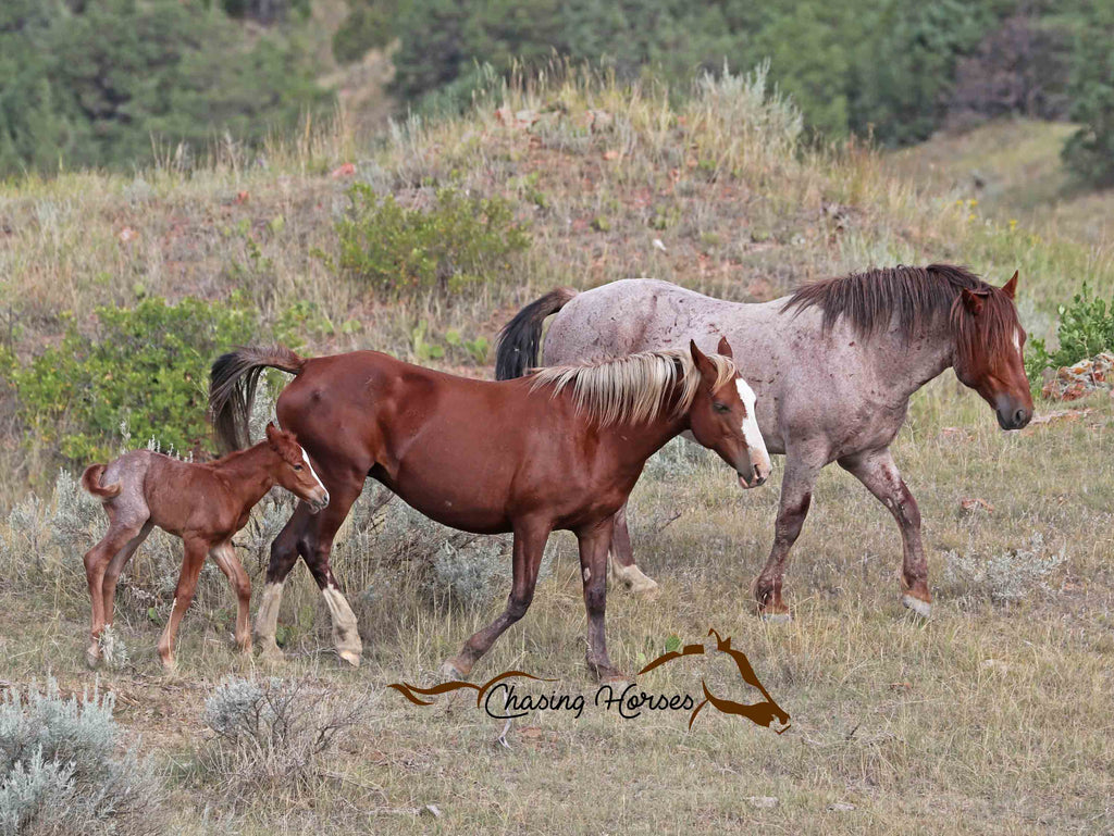 Stallion Ollie Jr, Mare Autumn and Filly Brier print