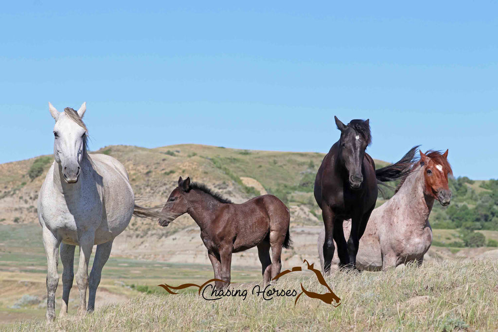 Mare Sapphire, Filly Aqua, Filly Jewel and Stallion Ollie Jr. print